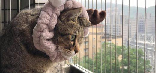 客戶提供的防貓照片,非常可愛