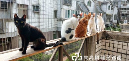 隱形鐵窗的防貓非常難做