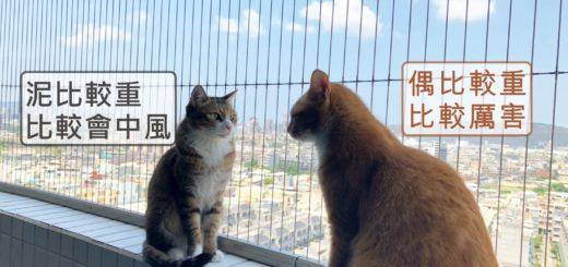 兩隻貓咪談論隱形鐵窗規格大小的優缺點