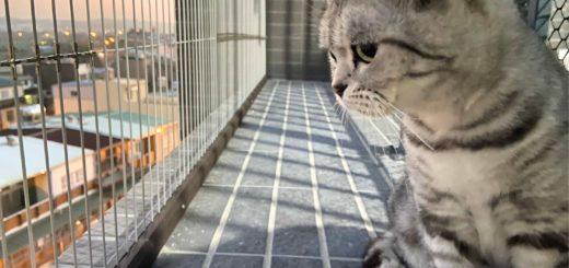 隱形鐵窗防貓要有宣信線